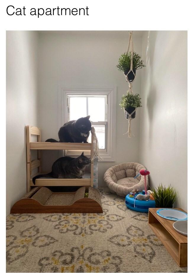 Room - Cat apartment