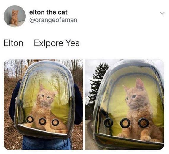 Product - elton the cat @orangeofaman Elton Exlpore Yes