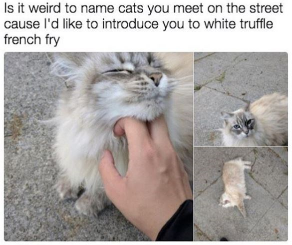 Cat - Is it weird to name cats you meet on the street cause l'd like to introduce you to white truffle french fry