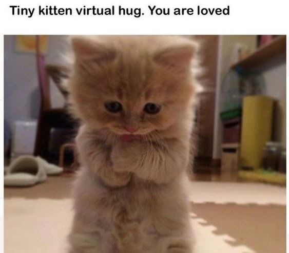 Cat - Tiny kitten virtual hug. You are loved