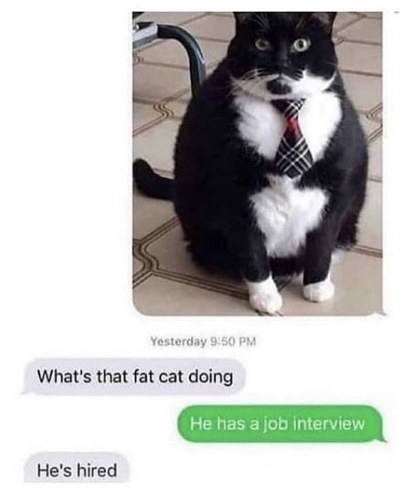 Cat - Yesterday 9:50 PM What's that fat cat doing He has a job interview He's hired