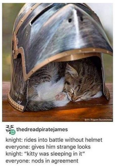 "Helmet - soto Angpen conooa thedreadpiratejames knight: rides into battle without helmet everyone: gives him strange looks knight: ""kitty was sleeping in it"" everyone: nods in agreement"