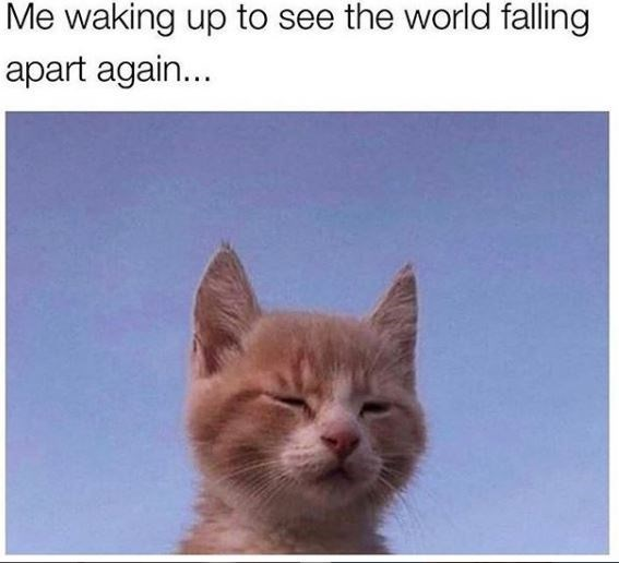 Cat - Me waking up to see the world falling apart again...