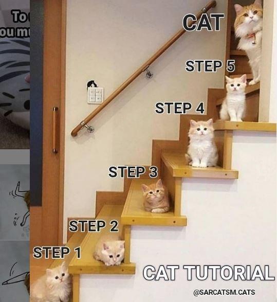 Shelf - To ou m CAT STEP 5 STEP 4 STEP 3 STEP 2 STEP 1 CAT TUTORIAL @SARCATSM.CATS