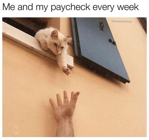 Floor - Me and my paycheck every week @petwineshop