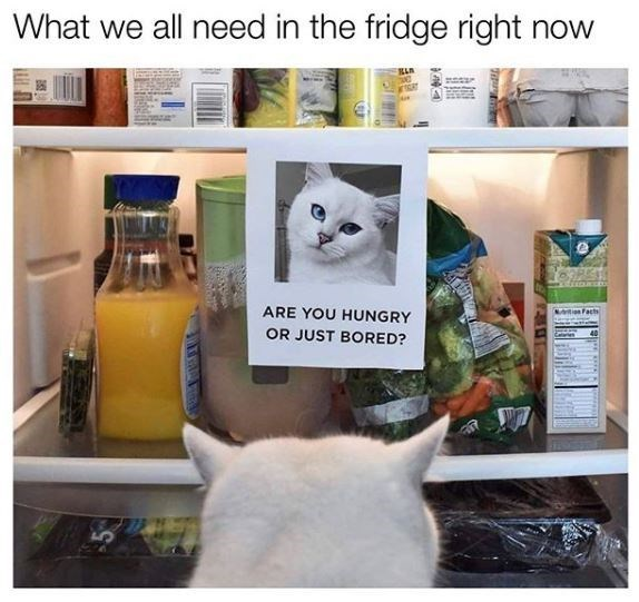 Product - What we all need in the fridge right now Nvition Fact ARE YOU HUNGRY OR JUST BORED?