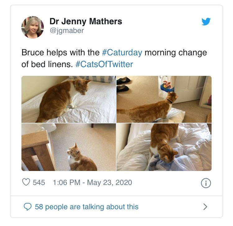 Product - Dr Jenny Mathers @jgmaber Bruce helps with the #Caturday morning change of bed linens. #CatsOfTwitter 545 1:06 PM - May 23, 2020 58 people are talking about this