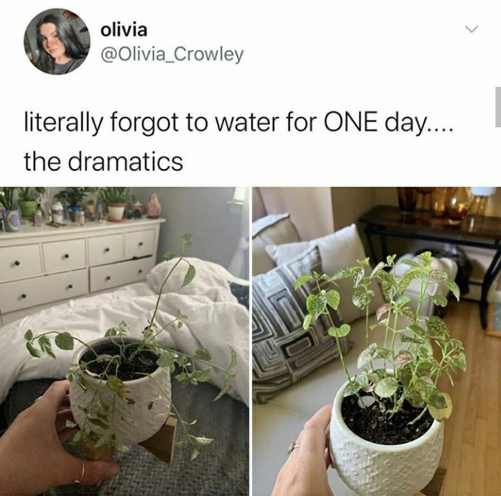 Flowerpot - olivia @Olivia_Crowley literally forgot to water for ONE day.... the dramatics