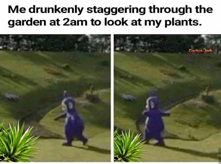 Organism - Me drunkenly staggering through the garden at 2am to look at my plants. Cactus Jerk