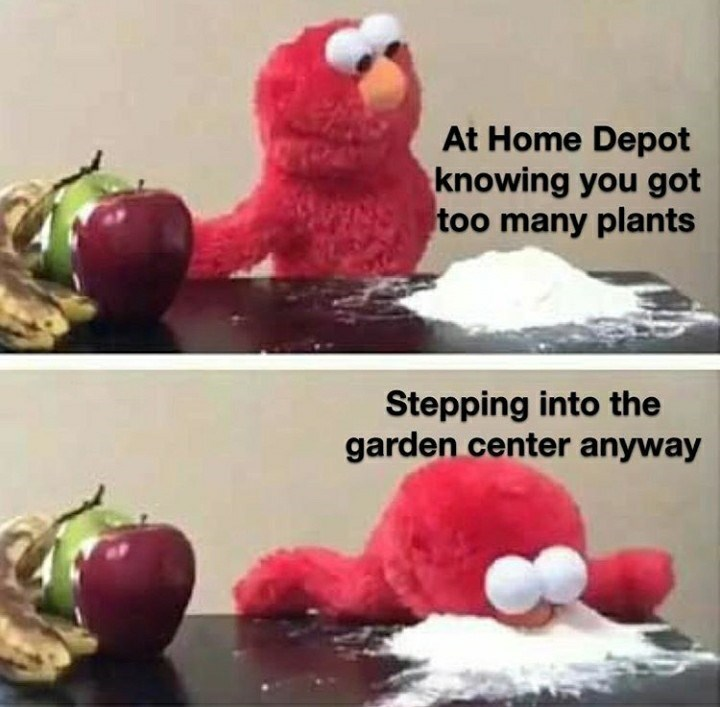 Organism - At Home Depot knowing you got too many plants Stepping into the garden center anyway