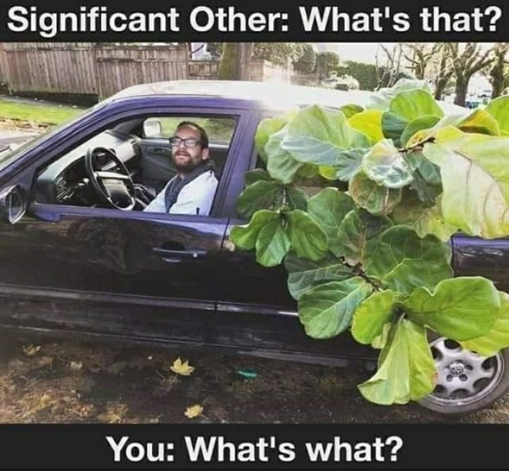 Plant - Significant Other: What's that? You: What's what?