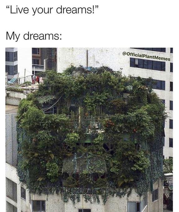 """Vegetation - """"Live your dreams!"""" My dreams: @OfficialPlantMemes"""