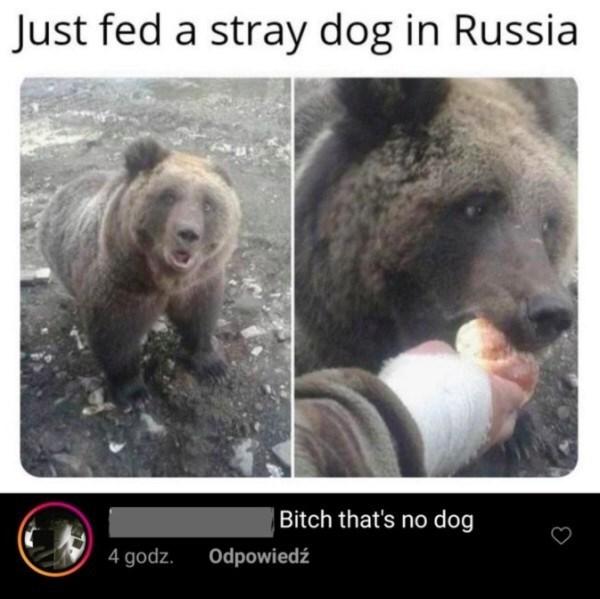 Grizzly bear - Just fed a stray dog in Russia Bitch that's no dog 4 godz. Odpowiedź