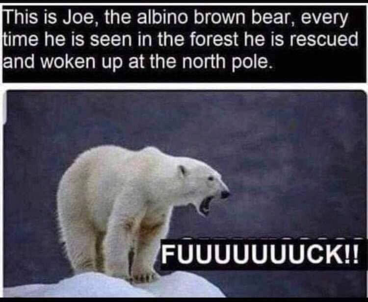 Polar bear - This is Joe, the albino brown bear, every time he is seen in the forest he is rescued and woken up at the north pole. FUUUUUUUCK!!