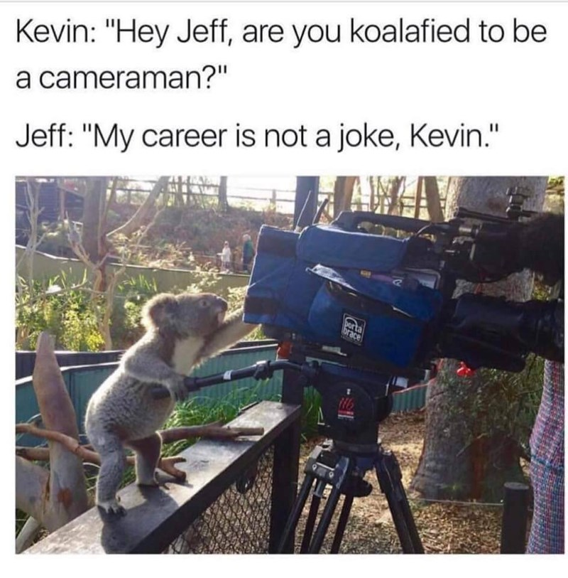 """Photography - Kevin: """"Hey Jeff, are you koalafied to be a cameraman?"""" Jeff: """"My career is not a joke, Kevin."""" porta brace 116"""