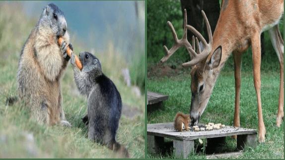 animal photos cute animals cute animal friendship animals - 9500165