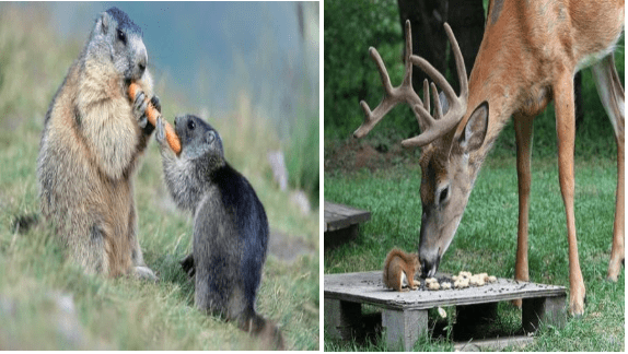 animals sharing food