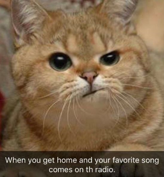 When you get home and your favorite song comes on the radio cute cat making a face