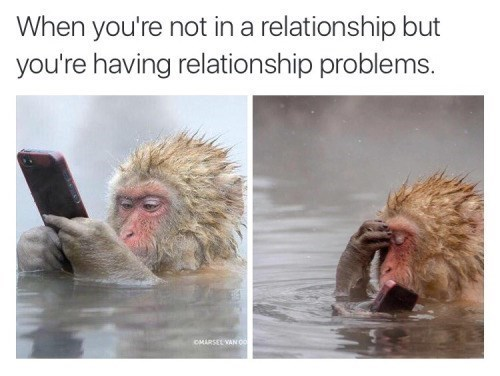Macaque - When you're not in a relationship but you're having relationship problems. OMARSEL VAN OO