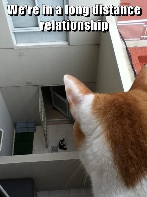 Cat - We're in a long distance relationship 419