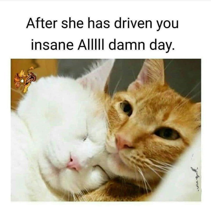 Cat - After she has driven you insane AlllI damn day.