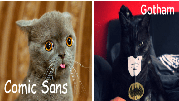 fonts funny cats cat photos Cats - 9501189