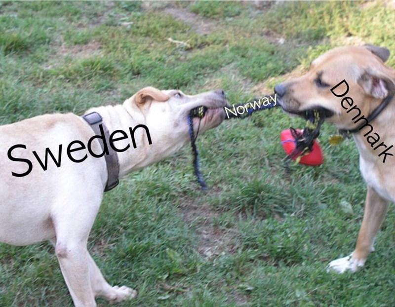Vertebrate - Sweden Norway Denmark