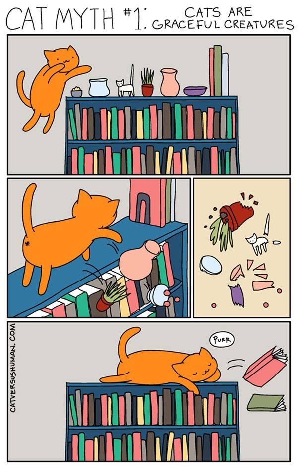 "Cartoon - CATS ARE CAL MYTH ""1. GRACEFUL CREATURES (PURR CATVERSUSHUMAN. COM 0."