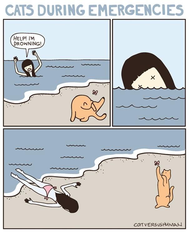 Cartoon - CATS DURING EMERGENCIES HELP! I'M DROWNING! CATVERSUSHMMAN
