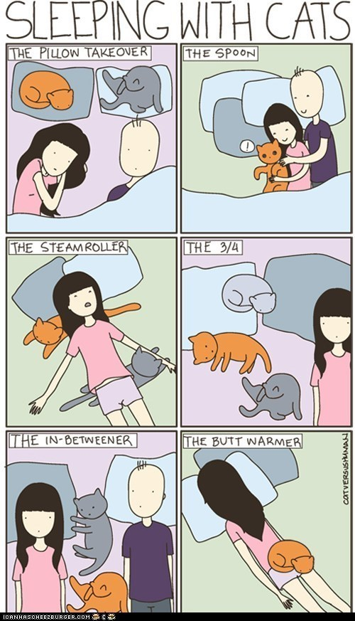 Cartoon - SLEEPING WITH CATS THE PILOW TAKEOVER THE SPOON THE STEAMROLLER THE 3/4 THE IN-BETWEENER THE BUTT WARMER ICANHASCHEEZBURGER.COM CATVERSUSHAMAN