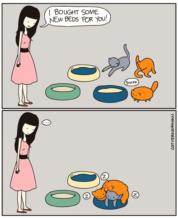 Cartoon - 1 BOUGHT SOME NEW BEDS FOR YOU! SNIFF (z) 2) CATVERSUSHMMAN