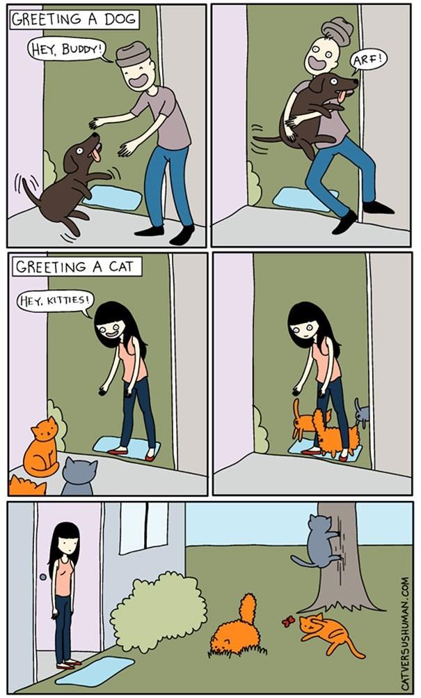 Cartoon - GREETING A DOG (HEY, BUDDY! ARE! GREETING A CAT (HEY. KITTIES! CATVERSUSHUMAN.COM