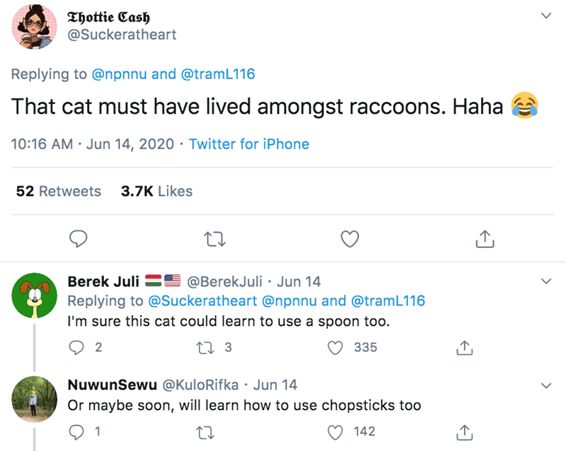 Text - Thottie Cash @Suckeratheart Replying to @npnnu and @tramL116 That cat must have lived amongst raccoons. Haha 10:16 AM · Jun 14, 2020 · Twitter for iPhone 52 Retweets 3.7K Likes Berek Juli =E @BerekJuli · Jun 14 Replying to @Suckeratheart @npnnu and @tramL116 I'm sure this cat could learn to use a spoon too. 2 27 3 335 NuwunSewu @KuloRifka · Jun 14 Or maybe soon, will learn how to use chopsticks too 1 142