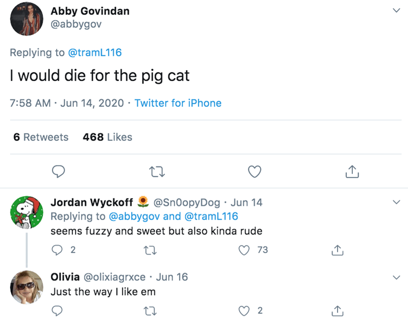 Text - Abby Govindan @abbygov Replying to @tramL116 I would die for the pig cat 7:58 AM · Jun 14, 2020 · Twitter for iPhone 6 Retweets 468 Likes Jordan Wyckoff Replying to @abbygov and @tramL116 seems fuzzy and sweet but also kinda rude @Sn0opyDog · Jun 14 2 73 Olivia @olixiagrxce · Jun 16 Just the way I like em