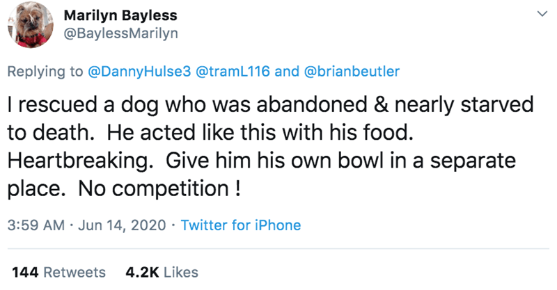 Text - Marilyn Bayless @BaylessMarilyn Replying to @DannyHulse3 @tramL116 and @brianbeutler I rescued a dog who was abandoned & nearly starved to death. He acted like this with his food. Heartbreaking. Give him his own bowl in a separate place. No competition ! 3:59 AM · Jun 14, 2020 · Twitter for iPhone 144 Retweets 4.2K Likes