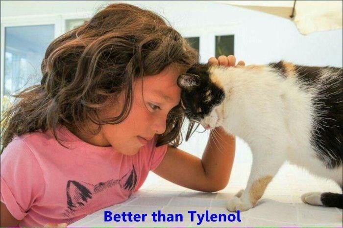 Mammal - Better than Tylenol