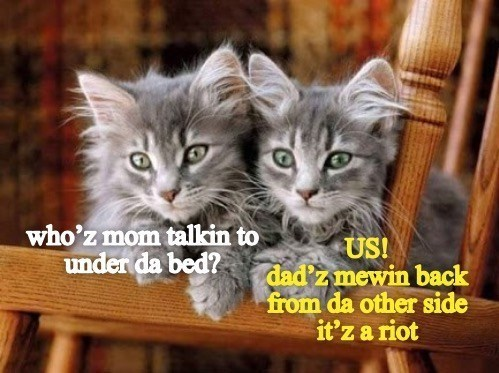 Cat - who'z mom talkin to US! dad'z mewin back from da other side it'z a riot under da bed?
