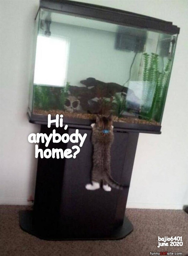 Houseplant - Hi, anybody home? bajio6401 june 2020 funnyCATsite.com