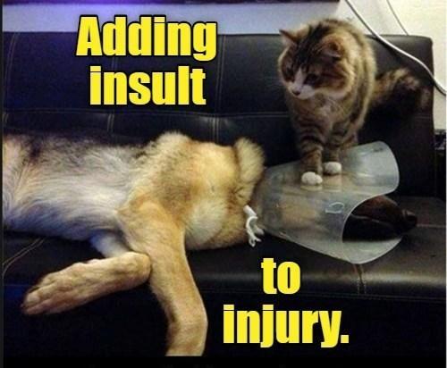 Cat - Adding insult to injury.