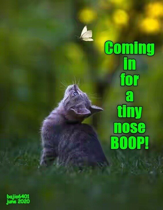 Adaptation - Coming in for a tiny nose BOOP! bajio6401 june 2020