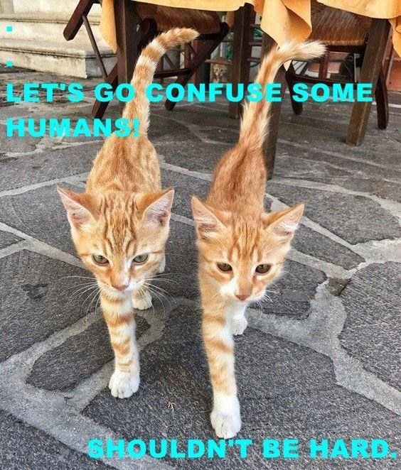 Cat - LET'S GO CONFUSE SOME HUMANS cHOULDNT BE HARD