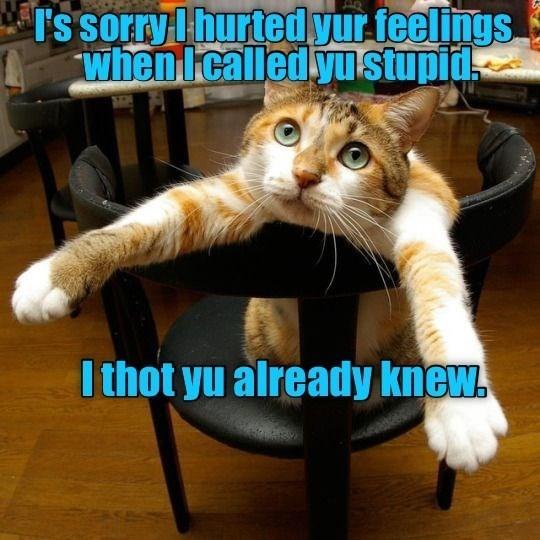 Cat - I's sorry lhurted yur teelings. when Icalledyu stupid. I thot yu already knew.