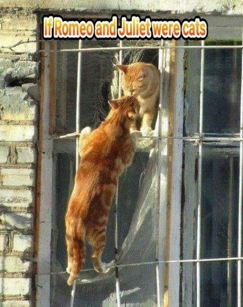 Cat - FRomeo and Juliet were cats