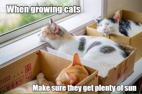 Cat - When growing cats 冷凍食品一 Make sure they get plenty of sun