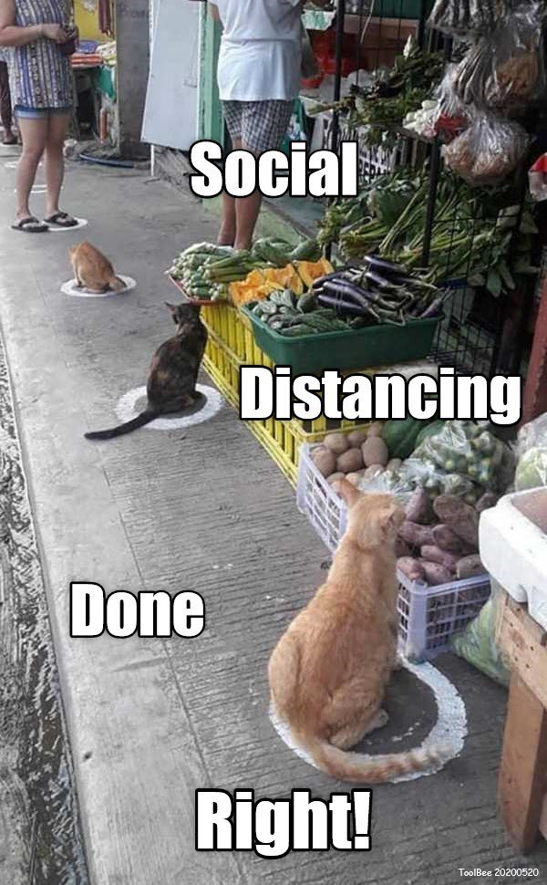 Street dog - Social Distancing Done Right! ToolBee 20200520