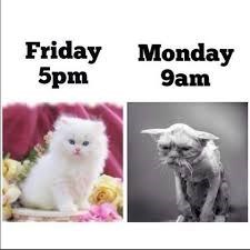Cat - Friday 5pm Monday 9am