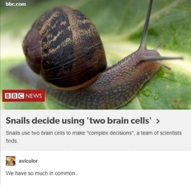"""Sea snail - bbc.com BBC NEWS Snails decide using 'two brain cells' > Snails use two brain cells to make """"complex decisions"""", a team of scientists finds. aviculor We have so much in common."""