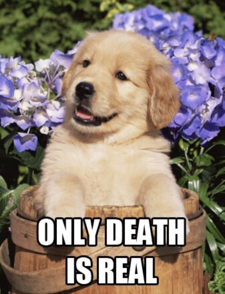 Dog - ONLY DEATH IS REAL