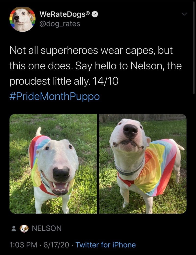 Dog - WeRateDogs® O @dog_rates Not all superheroes wear capes, but this one does. Say hello to Nelson, the proudest little ally. 14/10 #PrideMonthPuppo NELSON 1:03 PM · 6/17/20 · Twitter for iPhone