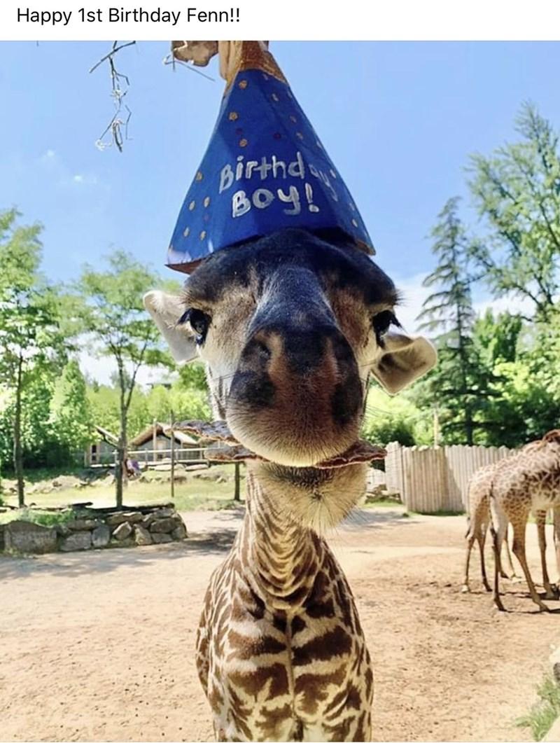 Giraffe - Happy 1st Birthday Fenn!! Birthd BOy!